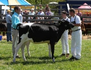 4-H Junior Dairy Cattle