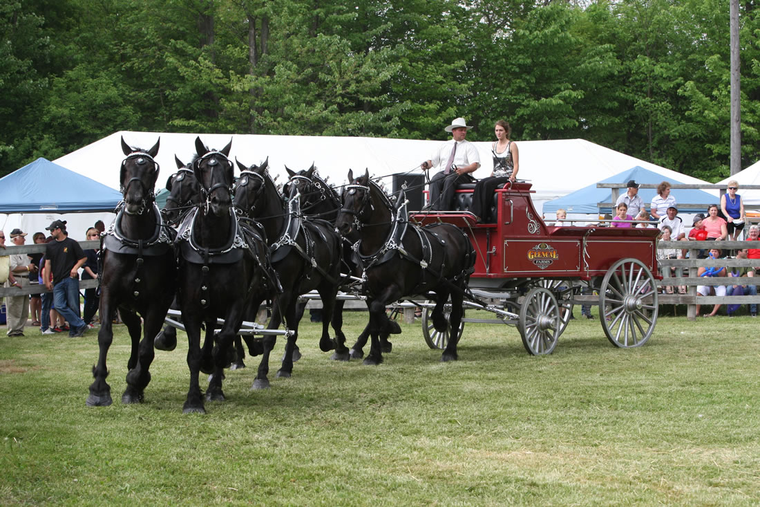 Six horse hitch at the Schomberg Fair 2015